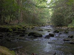 palmer-creek-in-big-cataloochee